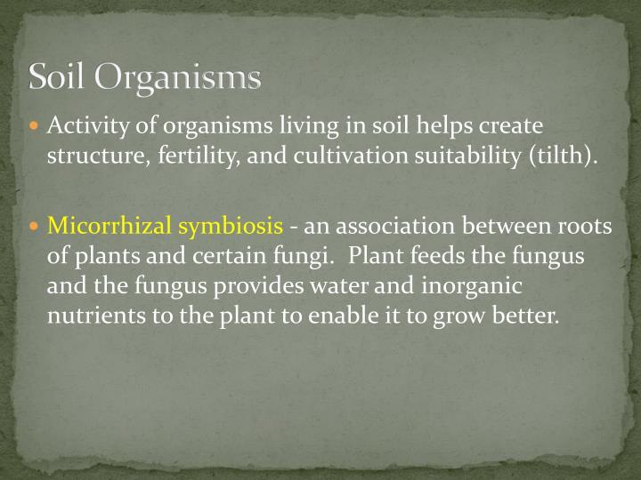 Soil Organisms
