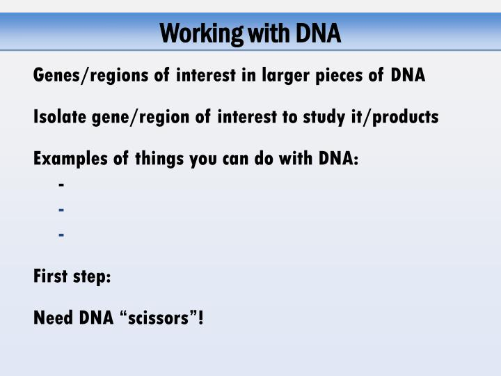 Working with DNA