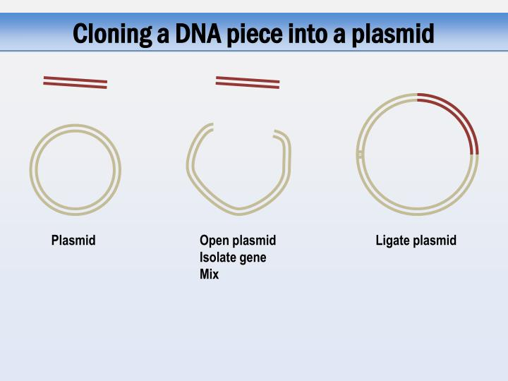 Cloning a DNA piece into a plasmid