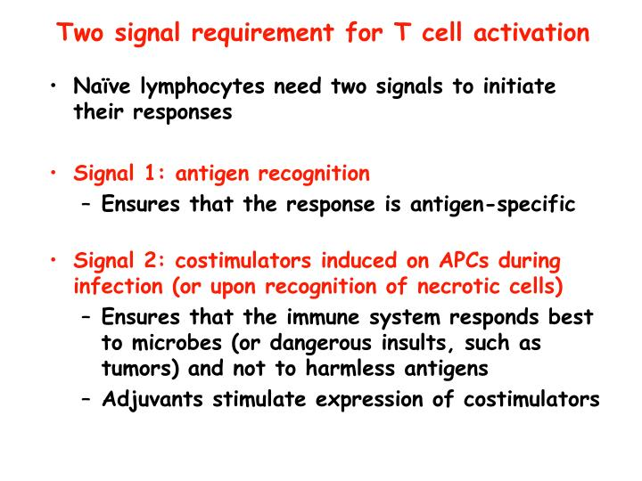 Two signal requirement for T cell activation