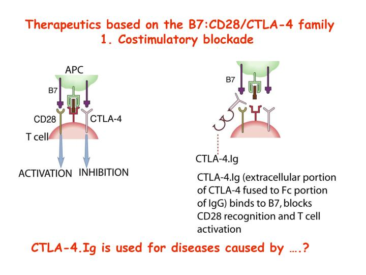 Therapeutics based on the B7:CD28/CTLA-4 family