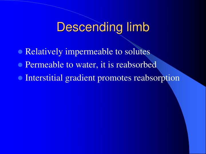 Descending limb