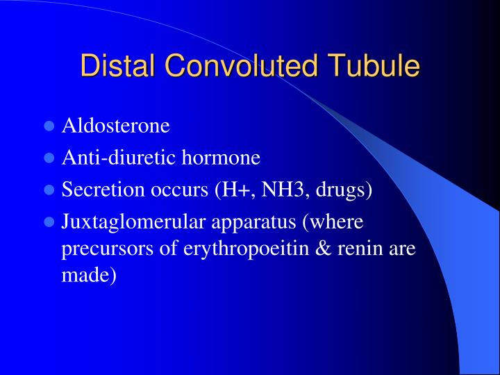Distal Convoluted Tubule