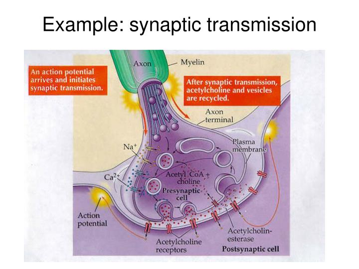 Example: synaptic transmission