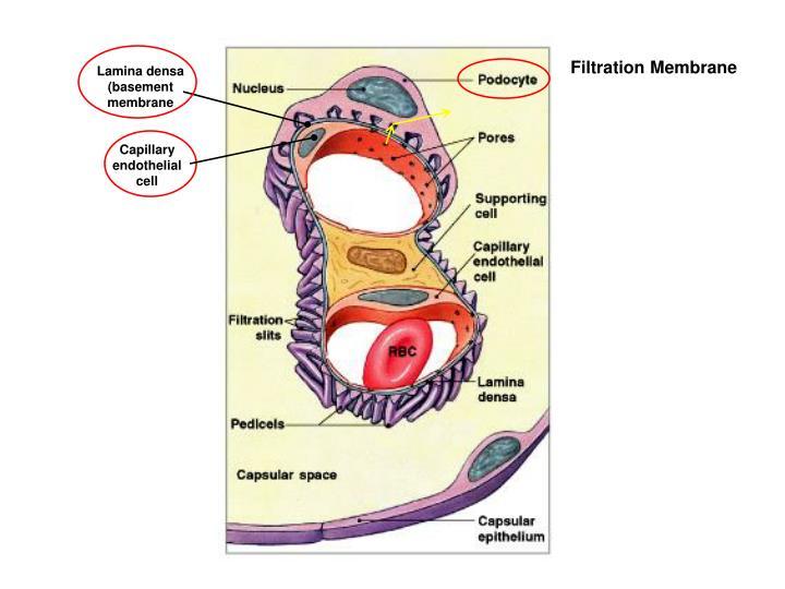 Filtration Membrane