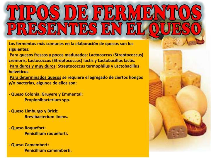 TIPOS DE FERMENTOS