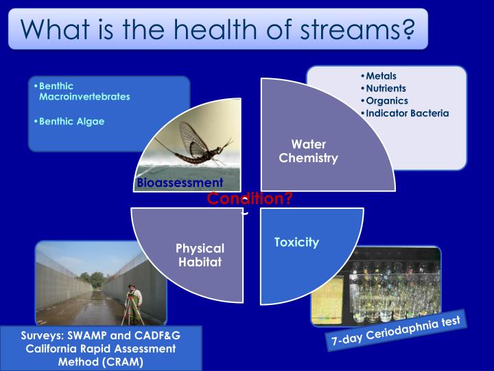 What is the health of streams?