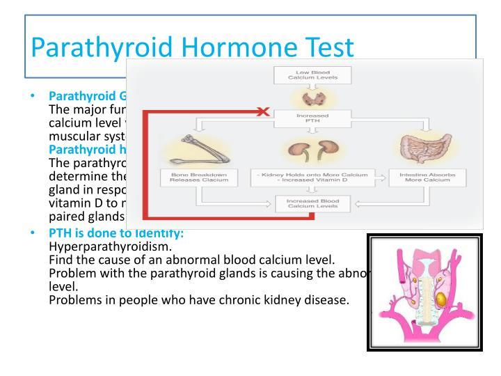 Parathyroid Hormone Test