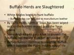 buffalo herds are slaughtered