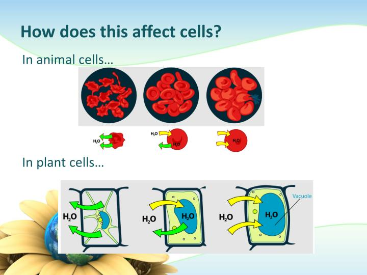 How does this affect cells?