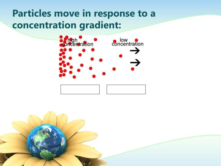 Particles move in response to a concentration gradient: