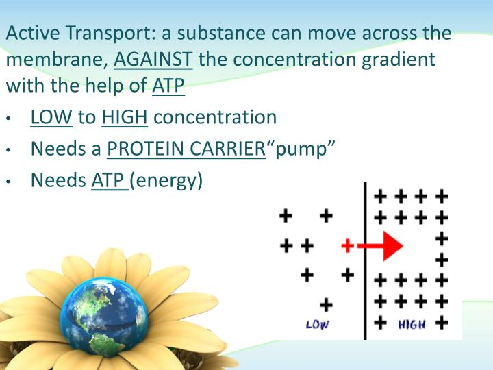 Active Transport: a substance can move across the