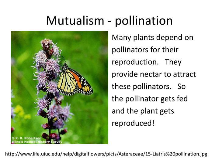 Mutualism - pollination