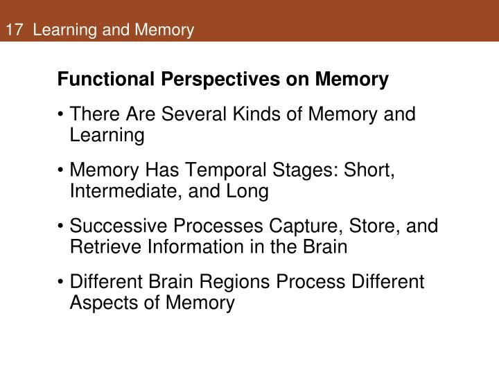 17  Learning and Memory