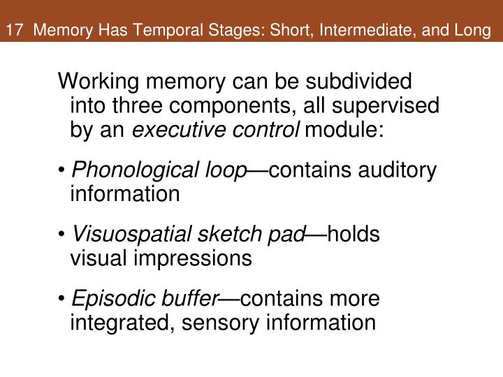 17  Memory Has Temporal Stages: Short, Intermediate, and Long