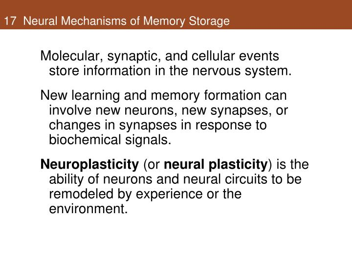 17  Neural Mechanisms of Memory Storage