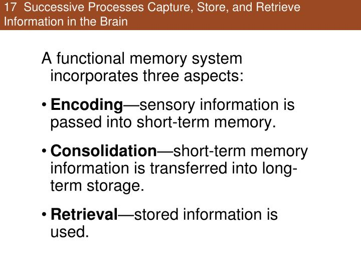 17  Successive Processes Capture, Store, and Retrieve Information in the Brain