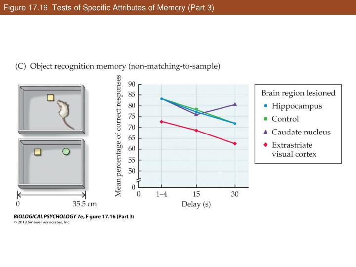 Figure 17.16  Tests of Specific Attributes of Memory (Part 3)
