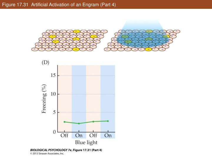Figure 17.31  Artificial Activation of an Engram (Part 4)