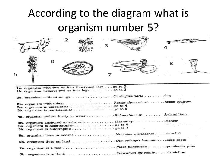 According to the diagram what is organism number 5?