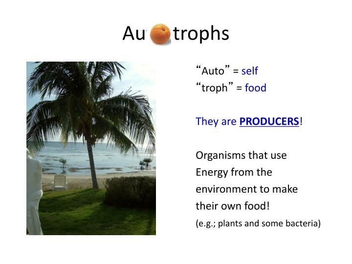 Aut    trophs