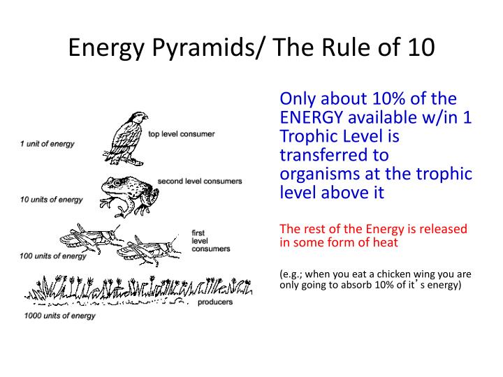 Energy Pyramids/ The Rule of 10