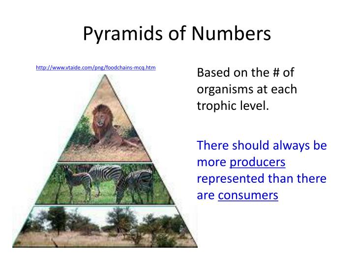 Pyramids of Numbers