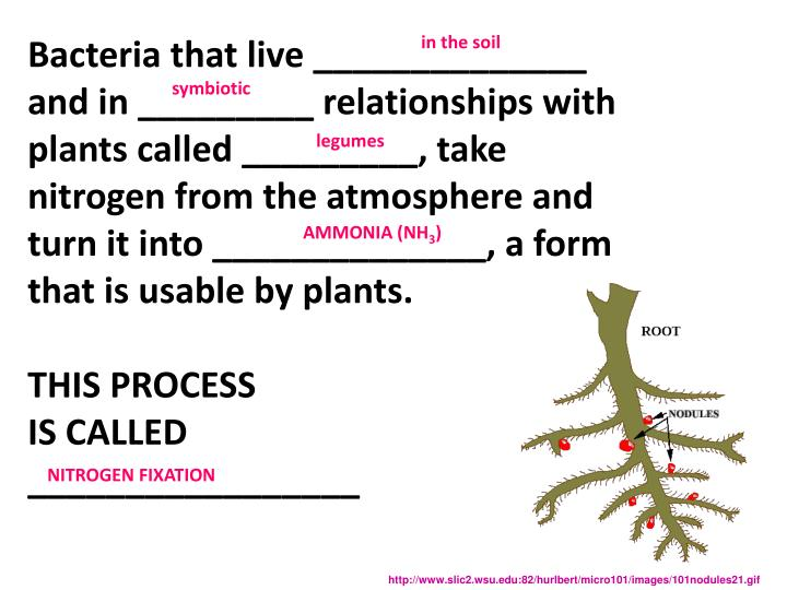 Bacteria that live ______________