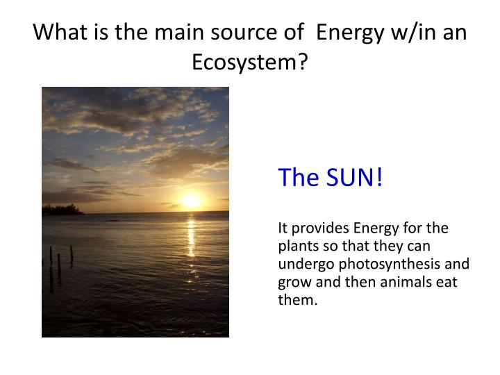 What is the main source of  Energy w/in an Ecosystem?