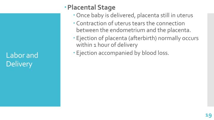 Placental Stage