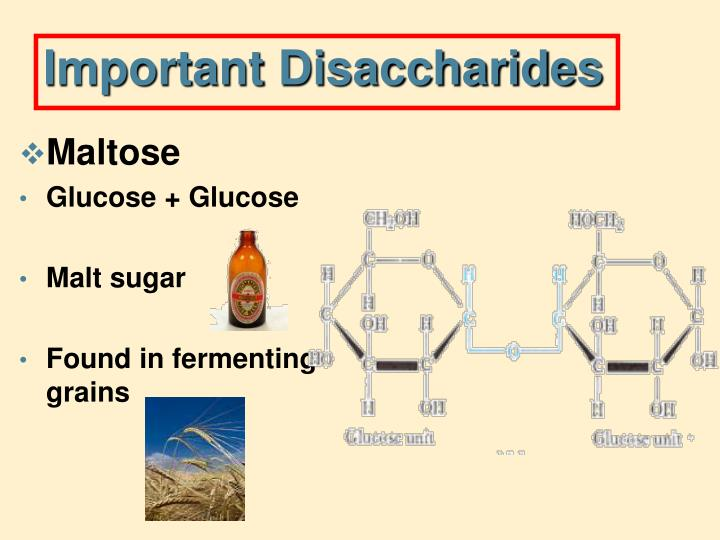 Important Disaccharides