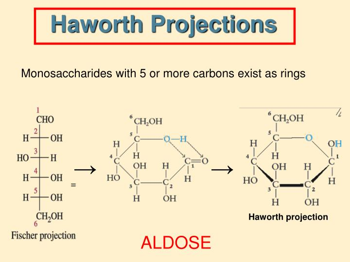 Haworth Projections