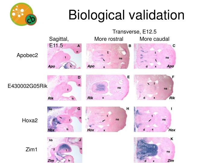 Biological validation