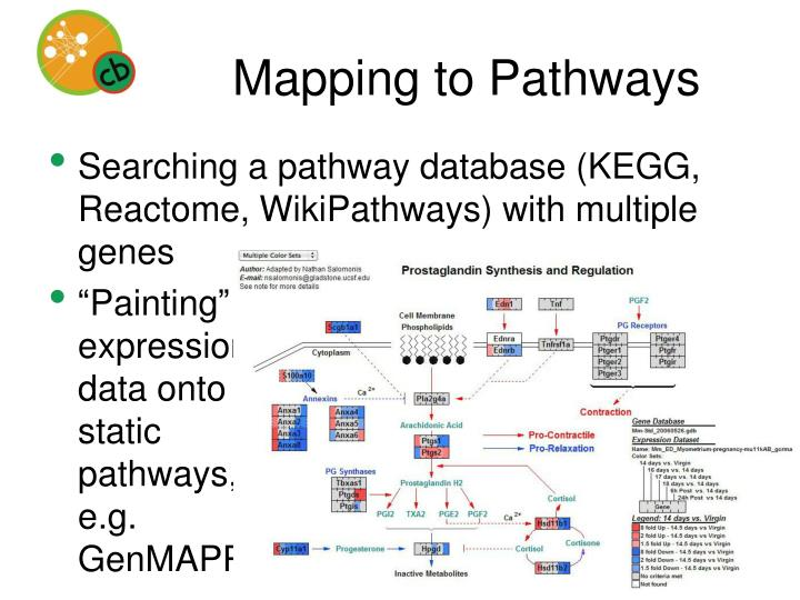 Mapping to Pathways