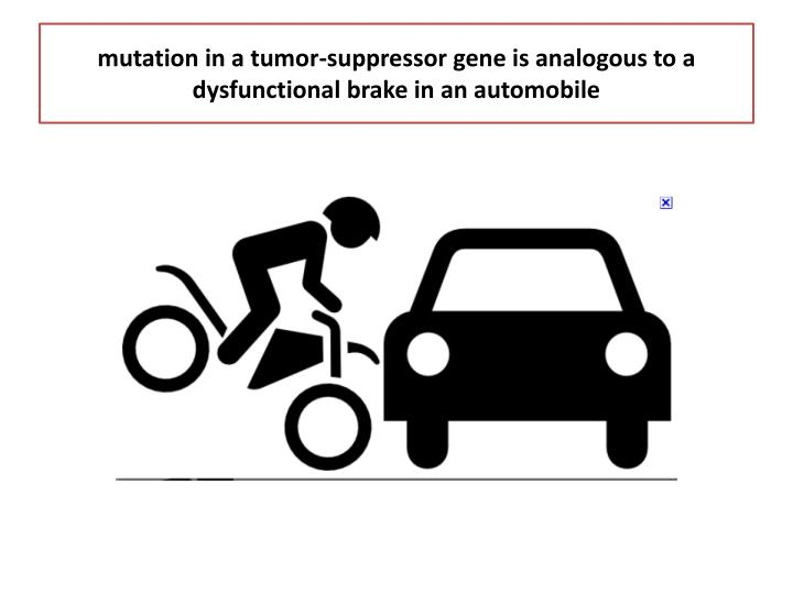 mutation in a tumor-suppressor gene is analogous to a dysfunctional brake in an automobile