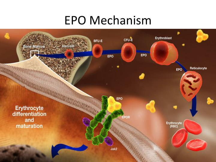 EPO Mechanism