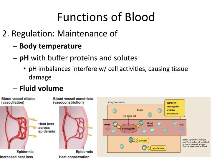 Functions of Blood