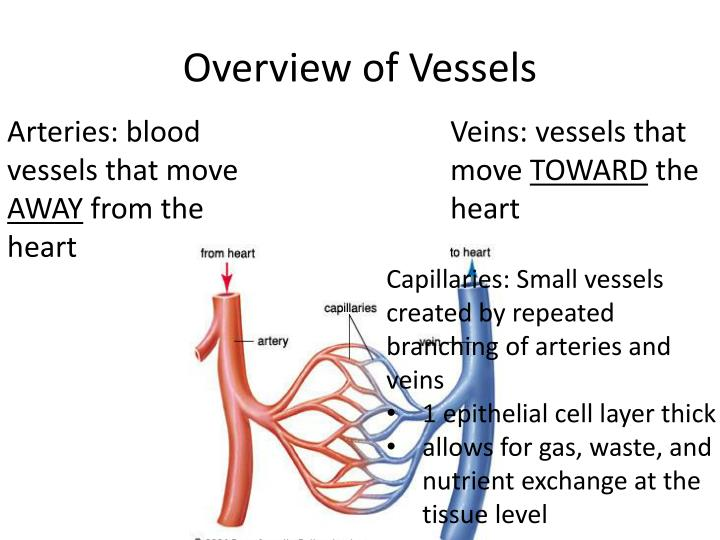 Overview of vessels