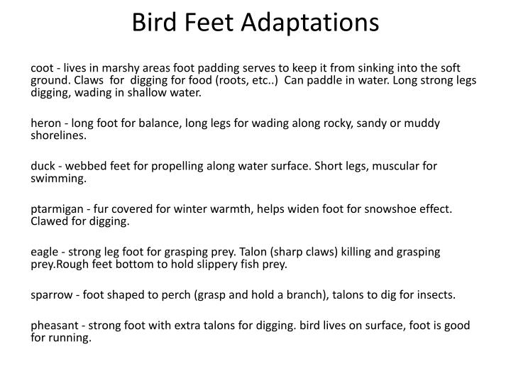 Bird Feet Adaptations