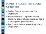 forests along the edges of rivers