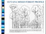 guyana mixed forest profile