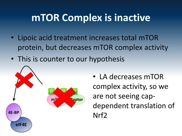 mTOR Complex is inactive