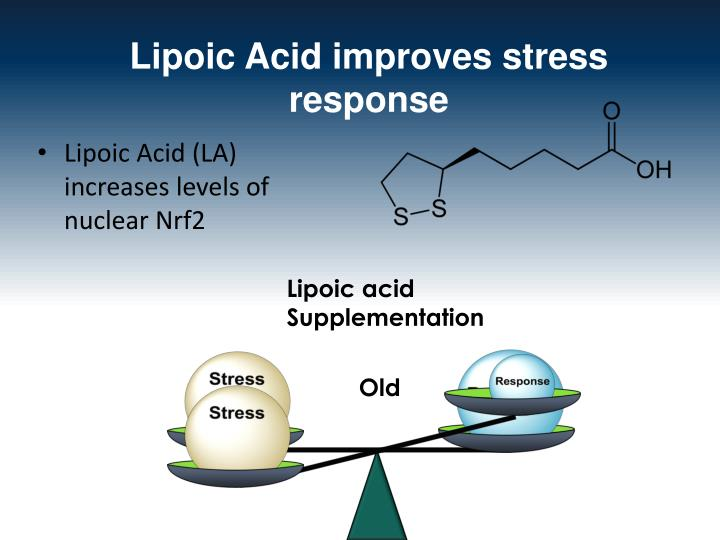 Lipoic Acid improves stress response