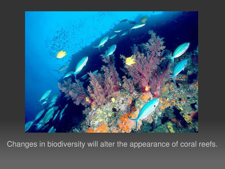 Changes in biodiversity will alter the appearance of coral reefs.