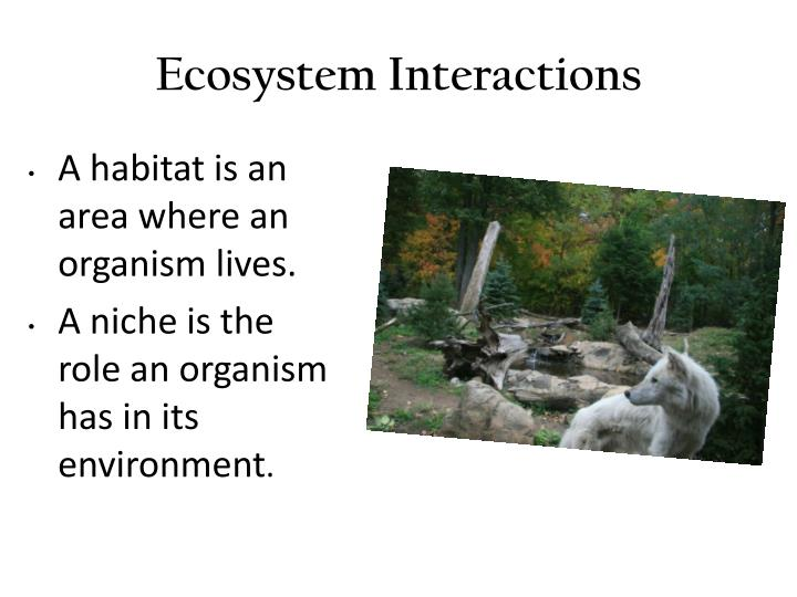 ecosystem interaction and relationship