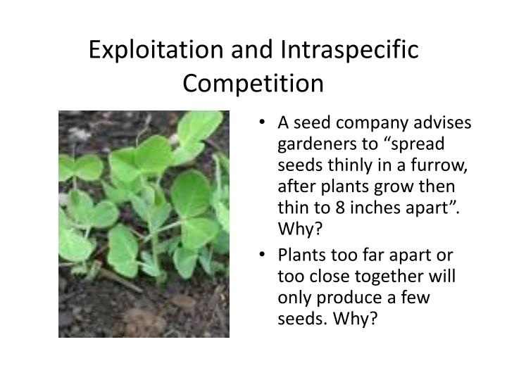 intraspecific competition the response of the Competition experiments interactions between species, predation predation models ecology lecture outline and study guide morehouse college bio 320 72 competition intraspecific competition function of water depth in competition-free transplants shows the response of t angustifolia.