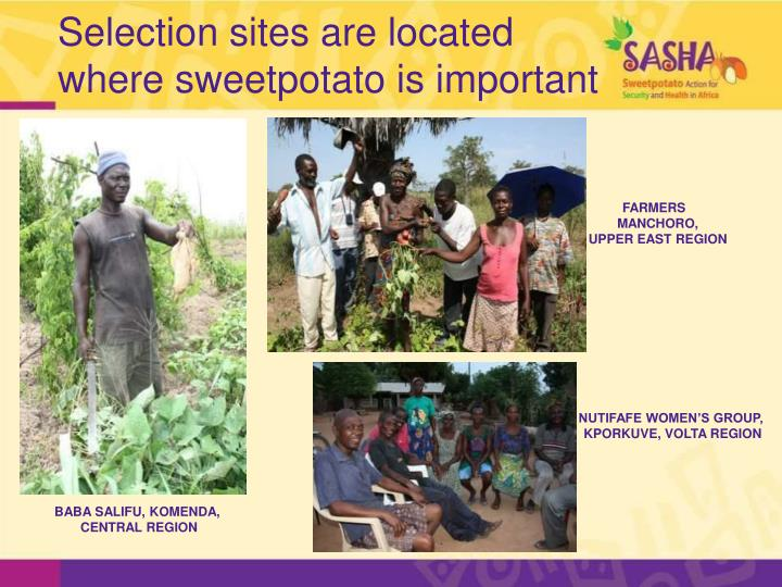 Selection sites are located where sweetpotato is important