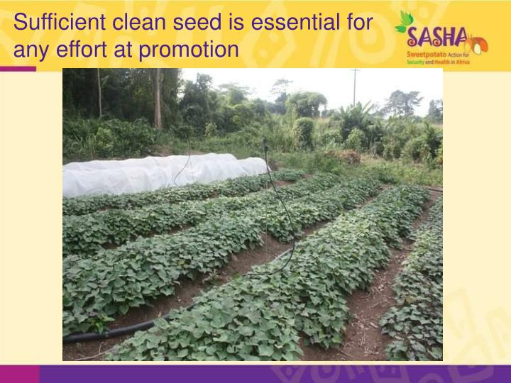 Sufficient clean seed is essential for