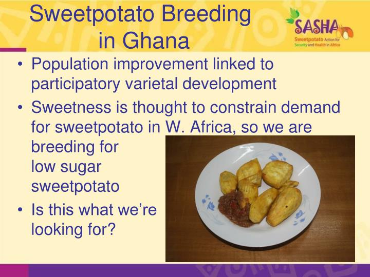 Sweetpotato Breeding