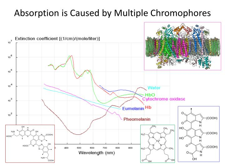 Absorption is Caused by Multiple